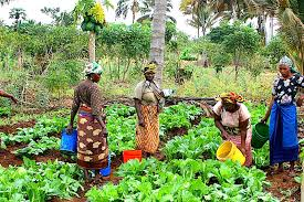 Women farmers - Nasarawa women farmers want increase in budgetary allocation for agriculture