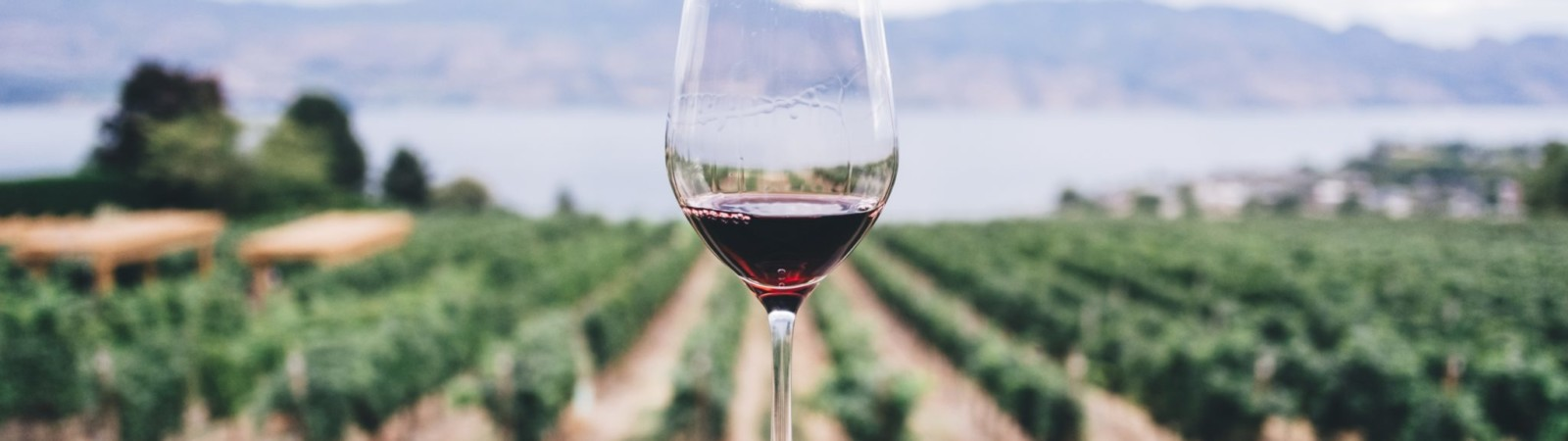 Is Drinking Wine Really Good for Your Heart?