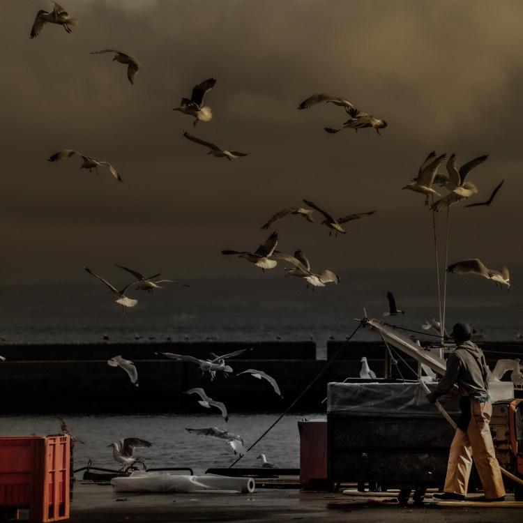 photographie Hocine Saad / Douarnenez port de pêche 01