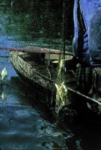 Une belle prise réalisée par un pêcheur professionnel originaire de Badefols sur Dordogne, Jean Gagnou