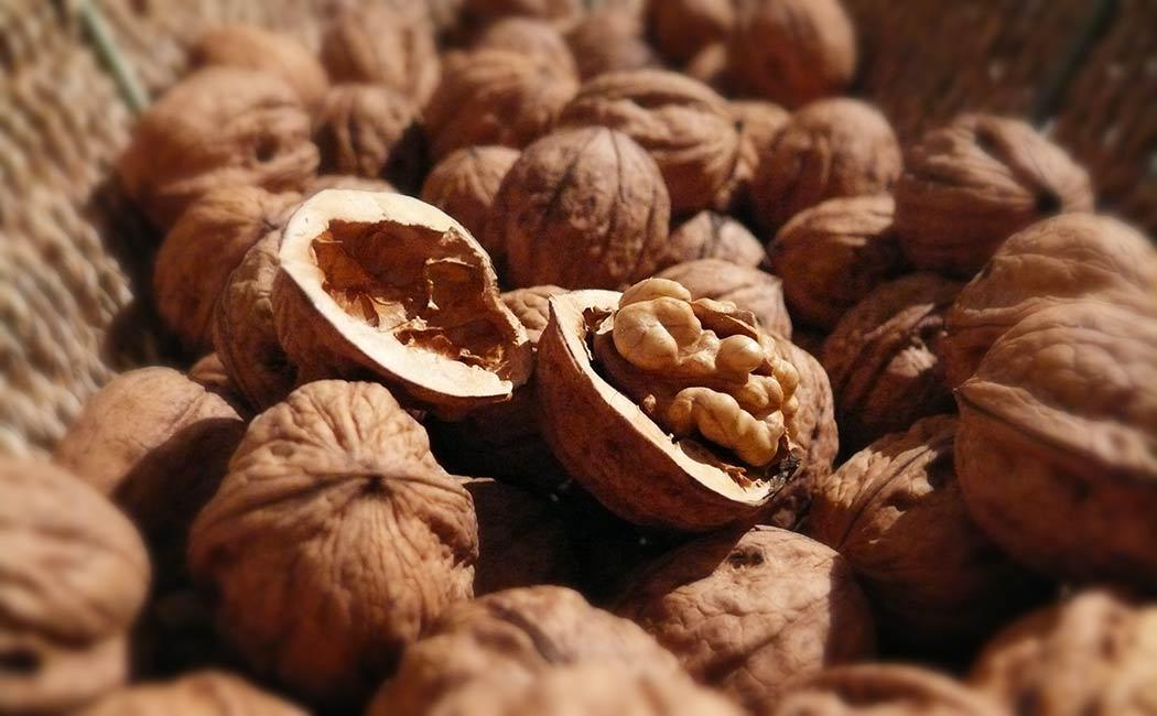 Les vertus diététiques de la noix
