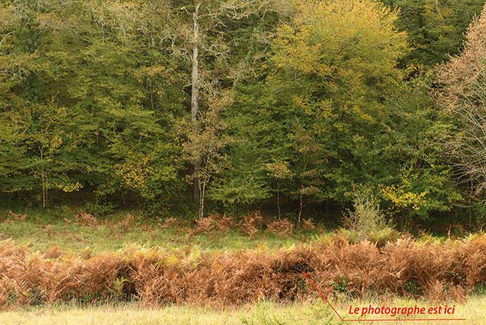 Photo animaliere, l'affût naturel de terrain