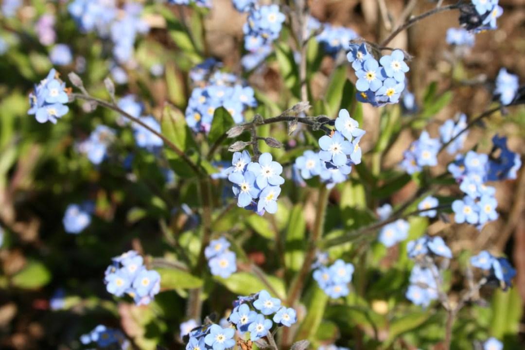 Idées de fleurs bleues