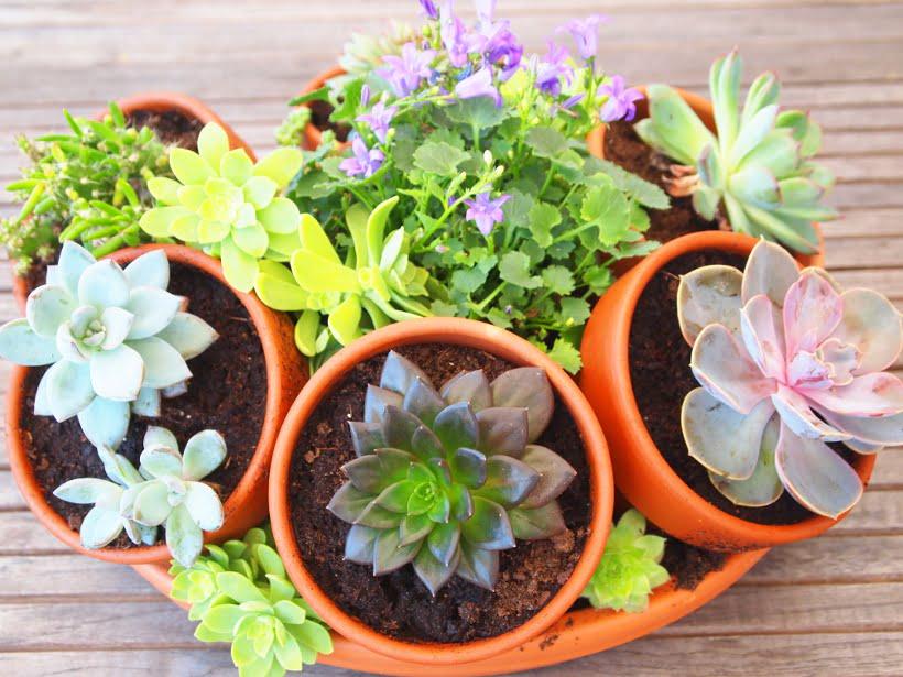 réaliser une composition de succulentes et plantes grasses