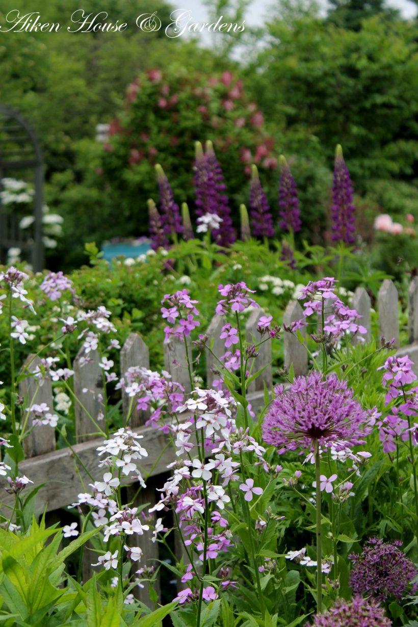 clôture fleurie