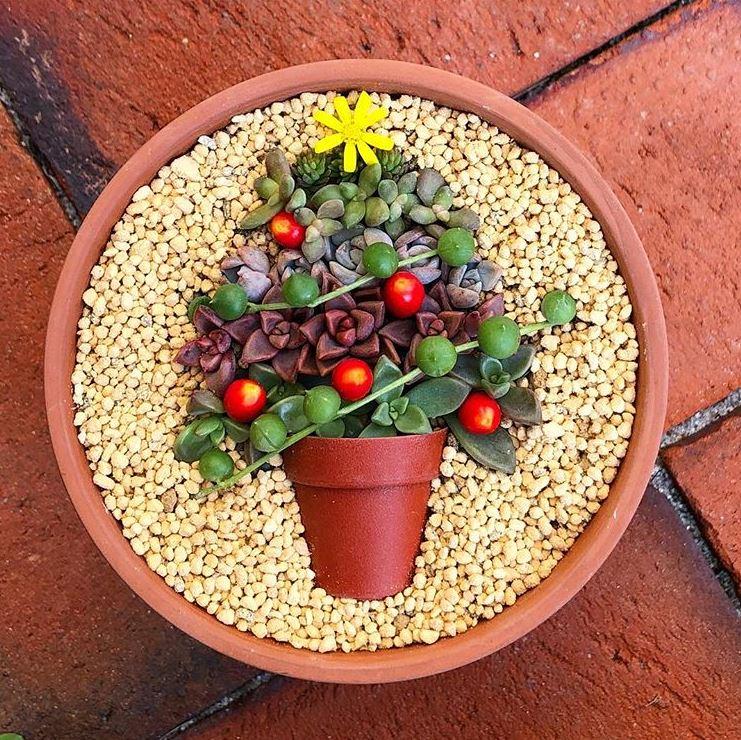Composition de succulentes pot in a pot