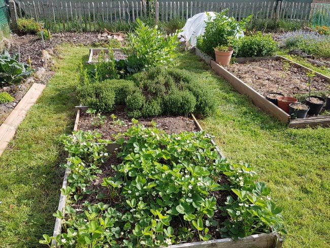 Le potager en avril - un jardin breton
