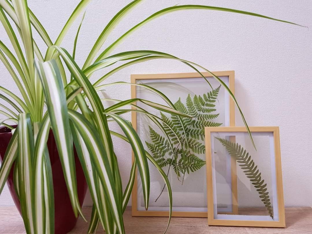DIY Herbier sous verre