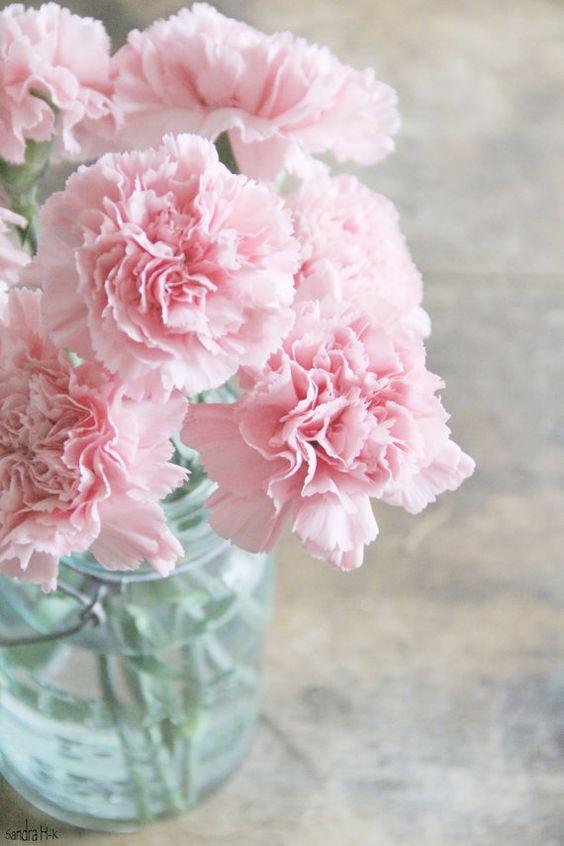 Fleurs roses en bouquets - Oeillets