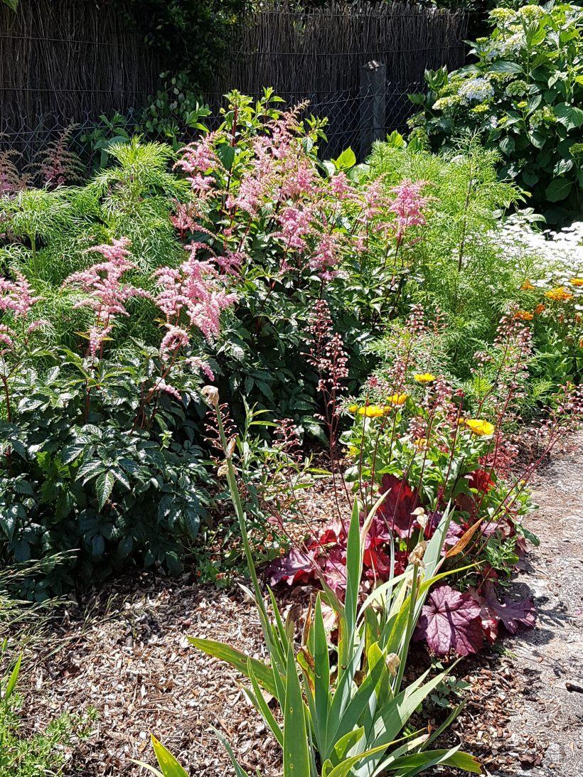 Le jardin d'Esprit laïta en juin