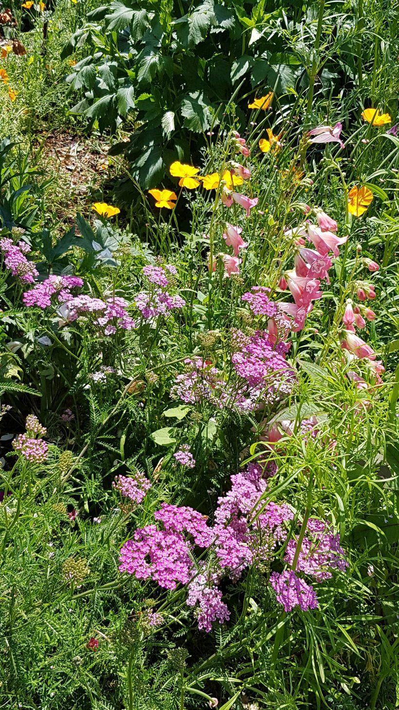 Le jardin d'Esprit Laïta en juin - La terrassse