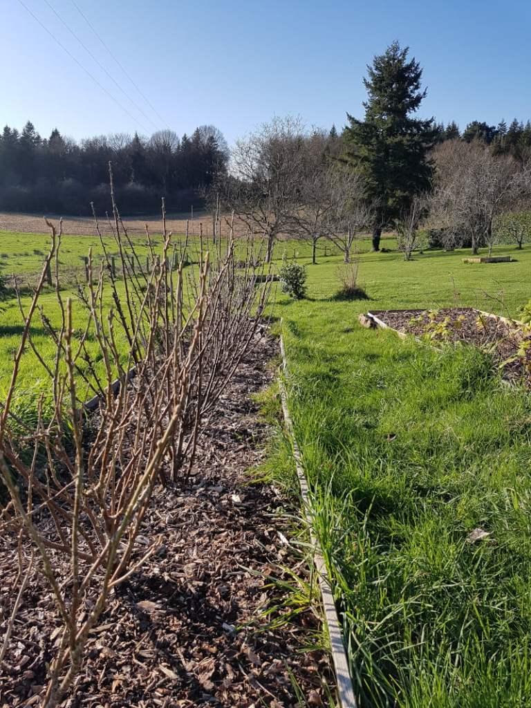 visite du jardin en janvier - petits fruits