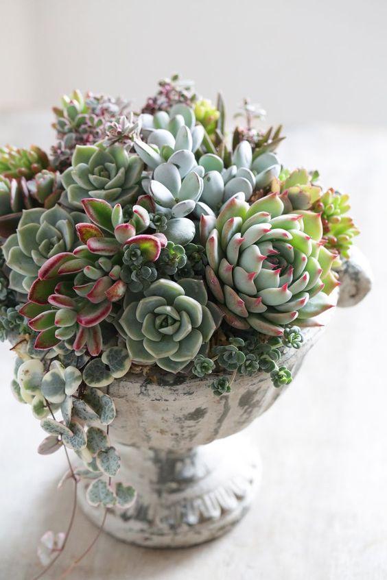 20 idées de composition florale et arrangements avec des succulentes, plantes grasses et cactus