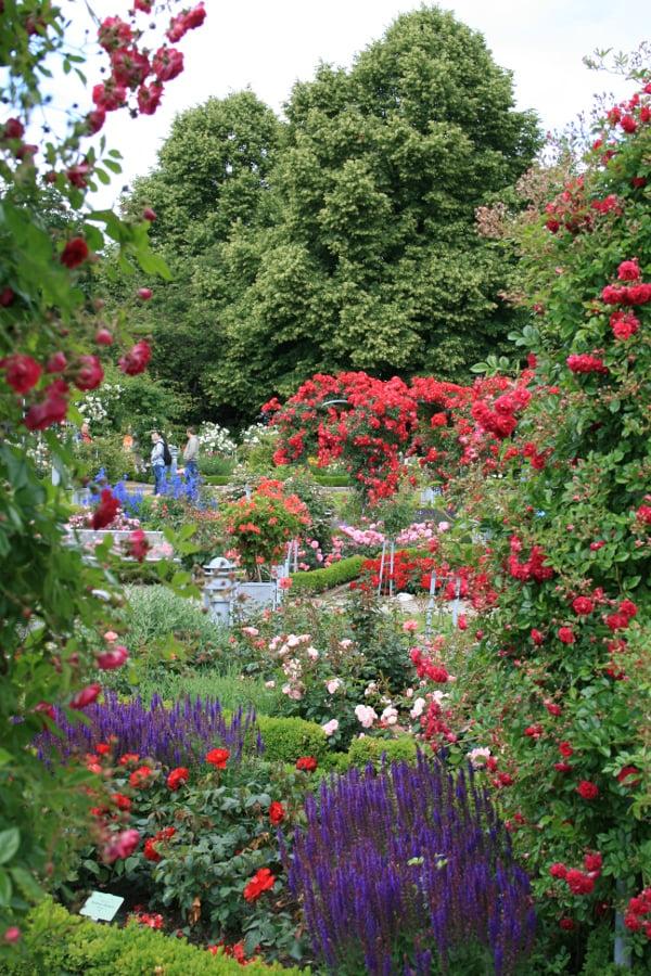 Planten un Blomen Hamburg - la roseraie