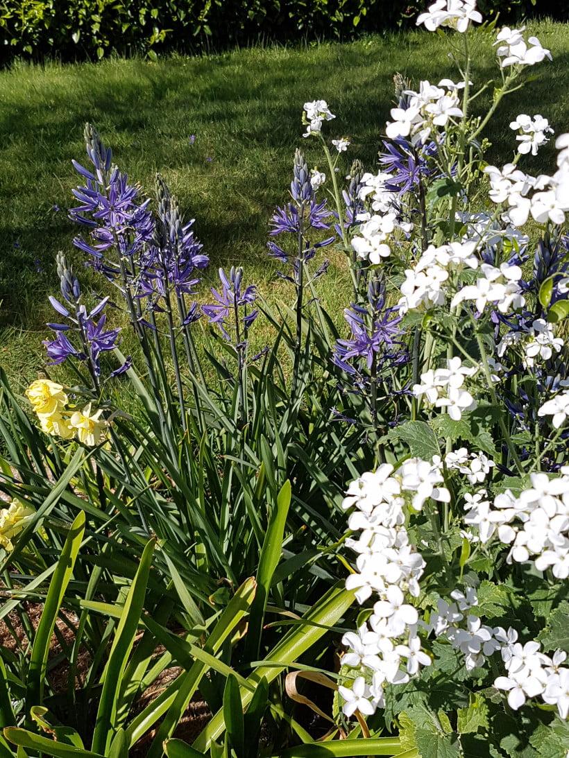 Arrangement fleuri pour un parterre en avril