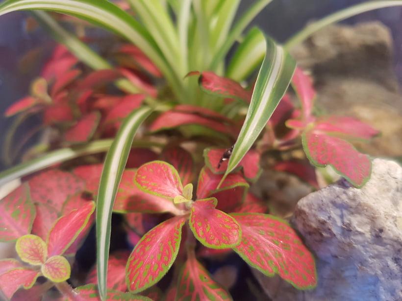 Petites plantes pour terrarium fait maison