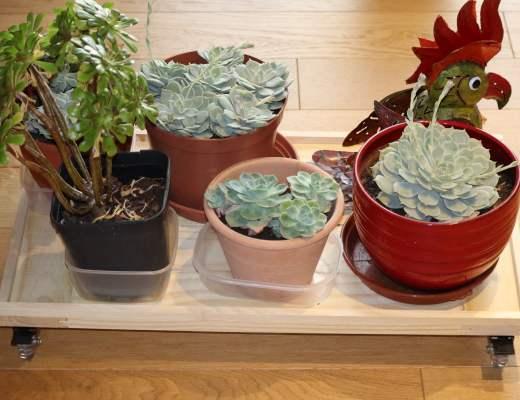 Tuto DIY Desserte plantes