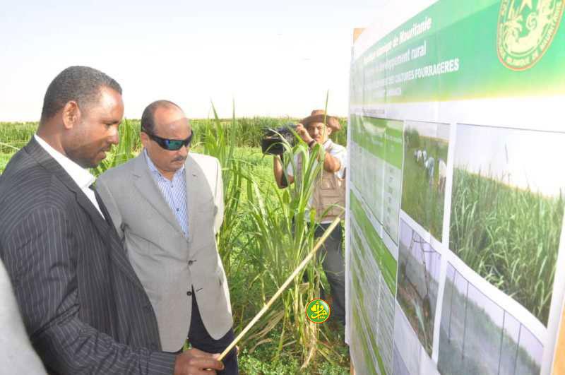 ولد عبد العزيز لدى زيارته مزرعة نموذجية لزراعة الأعلاف الخضراء