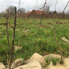 Plantation citoyenne 2021-5