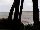Du bassin d'arcachon