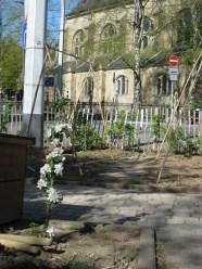 Unser Säulenapfelbaum blüht
