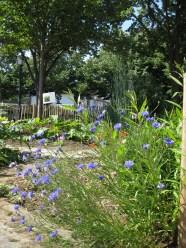 Der Garten gibt einiges für kleine Blumensträuße!