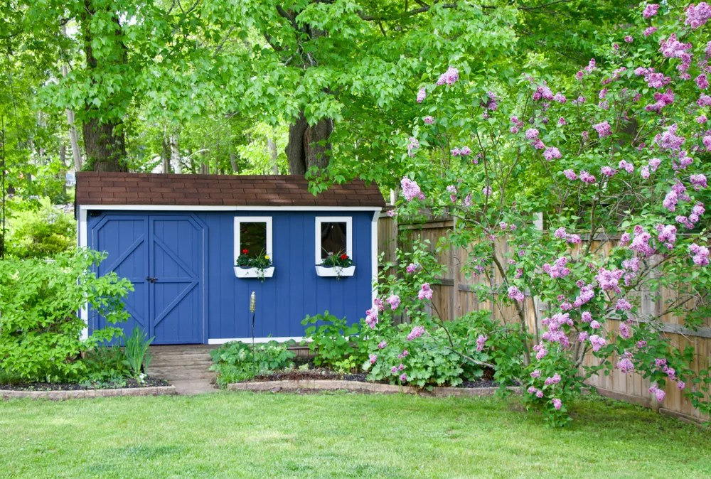Blue She Shed in the Backyard with Foliage Around