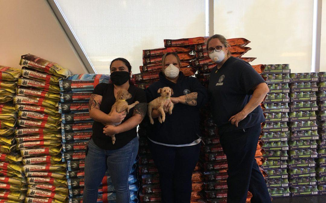 Los Angeles Animal Shelter