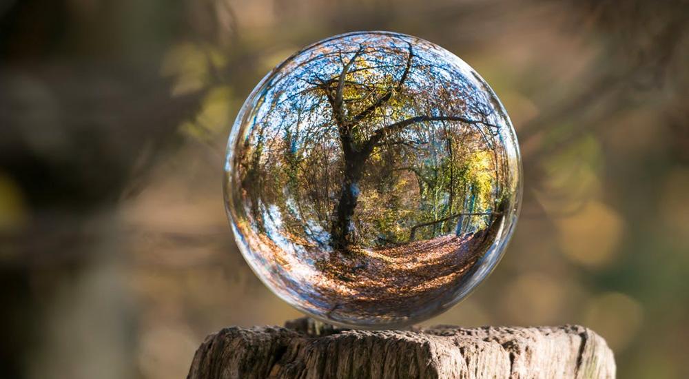Notre conscience et les arbres