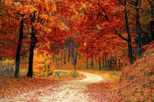 A dirt path surrounded by trees in autumn foliage