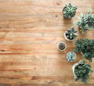Several potted succulents sit on a wooden surface
