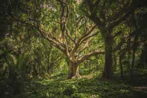 An old, gnarled tree twists its branches through a forest canopy