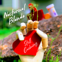 Nocturnal Blonde - Are Not Drowning But Waving With New Album, 'Still Gushing'