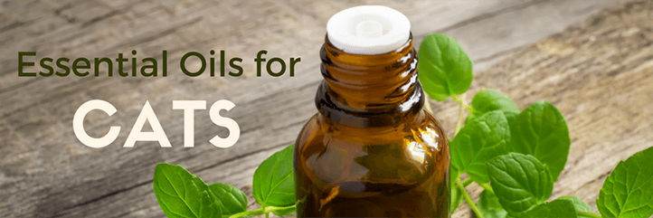 Essential oils for cats – is rosemary toxic to cats?