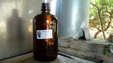 300 ml of pure myrtle essential oil is the precious end product of all this work day and night