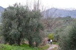 The White Mountains (Lefka Ori) of Crete high above...