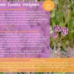 Essence Making Workshop Crete EN email