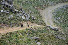 This family of wild goats checked upon the visitors