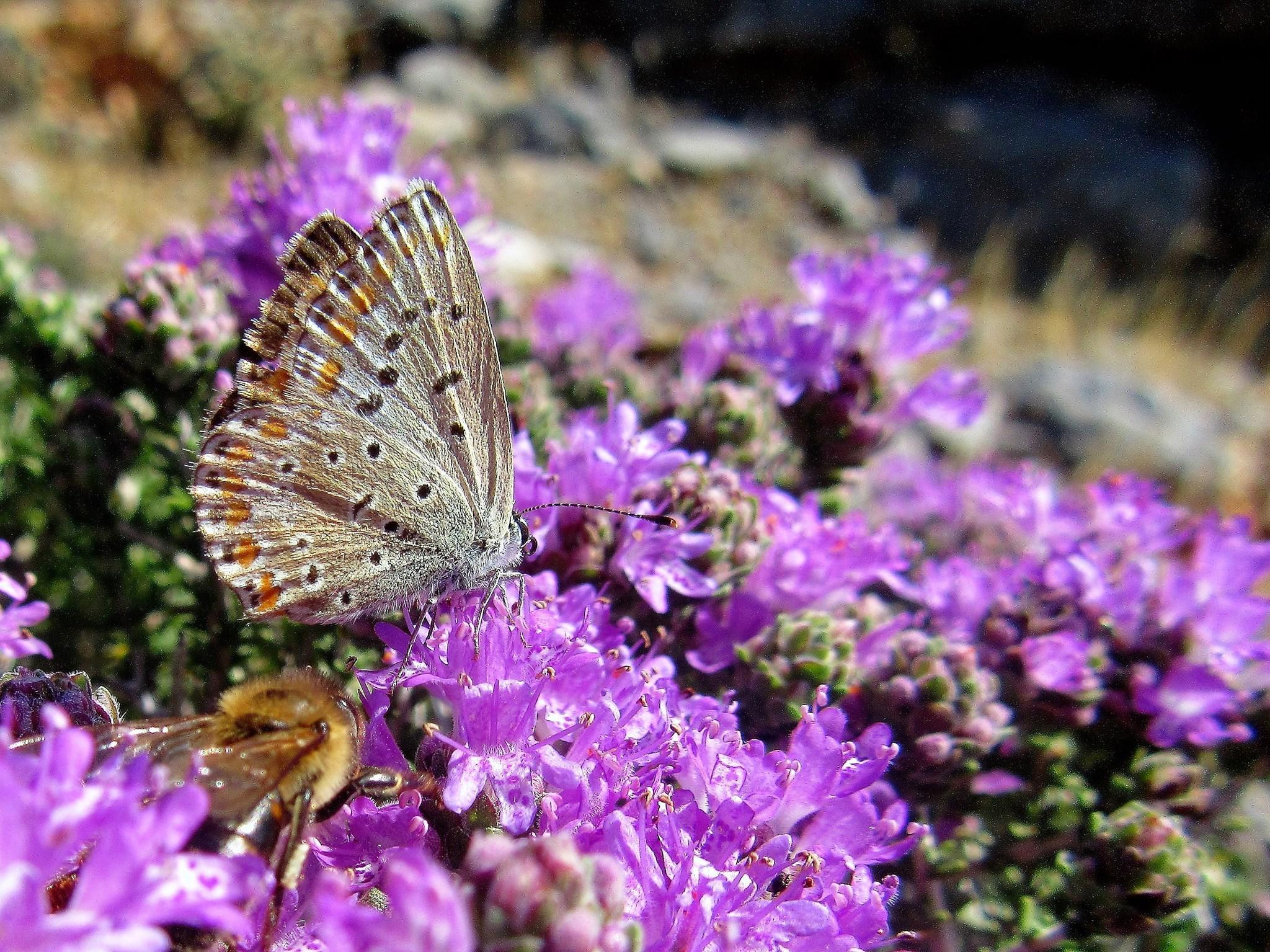 Plant Walk - A Sense of Herbal Summer