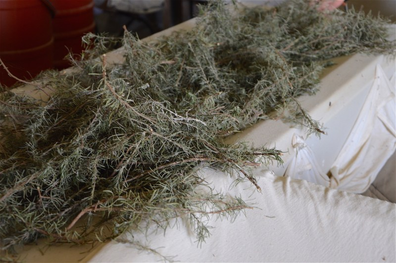 Abundant Rosemary: Keep focussed and carry on! – Essential
