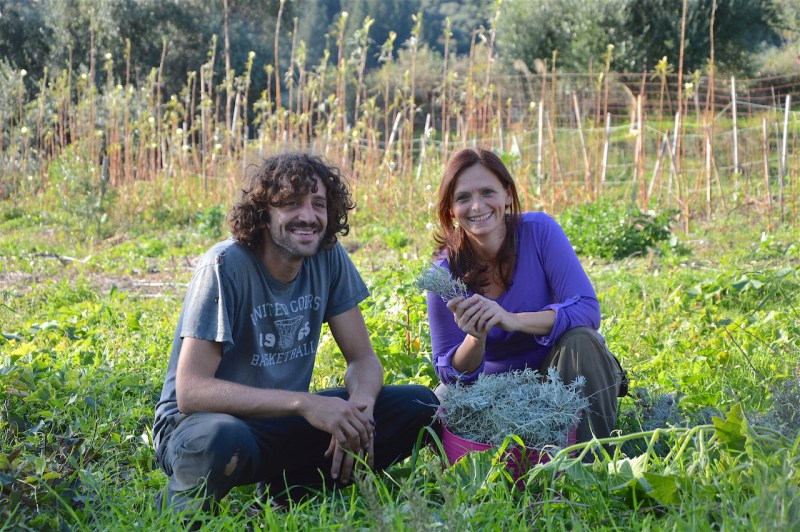 Ildiko harvesting helichrysum with Leonidas, November 2017