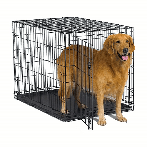 Dog Standing in dog training crate