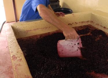 Vinifcazione - Gueli Vini - Vignaioli di Sicilia