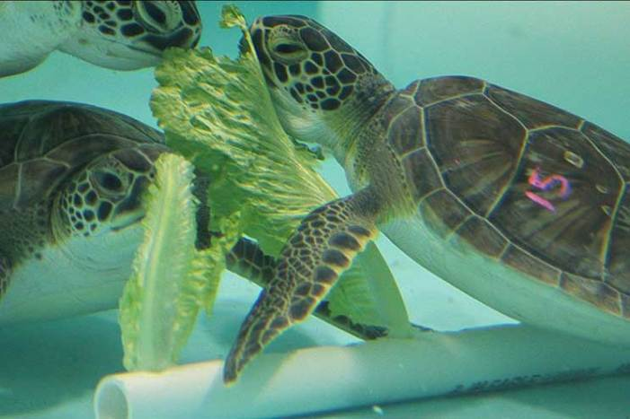 A green spring at Sea Turtle Recovery inside TBZ