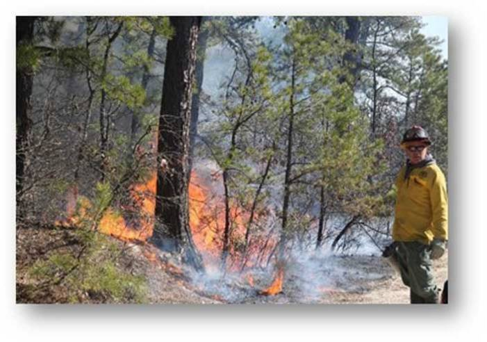 With peak wildfire season under way, DEP promotes fire safety