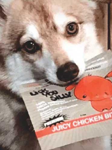 Dog-treat business gets going in Glen Ridge