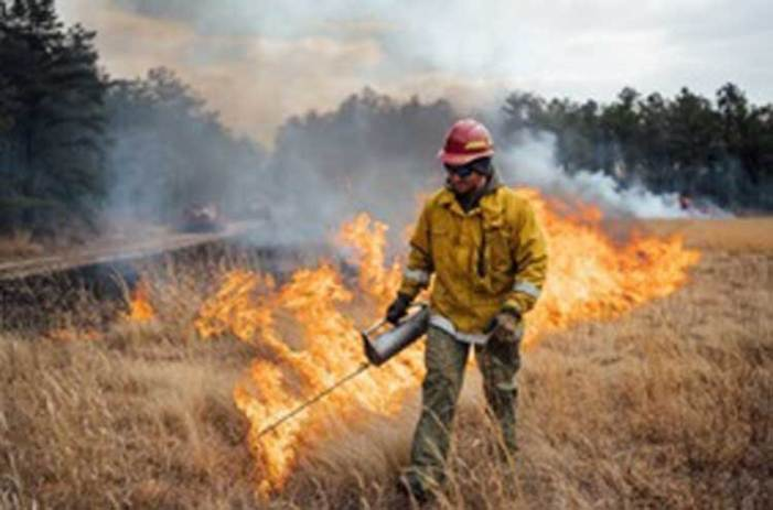 Forest fire prevention measures underway across New Jersey