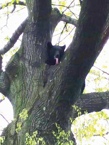 Black bears live here too, so stay alert and safe