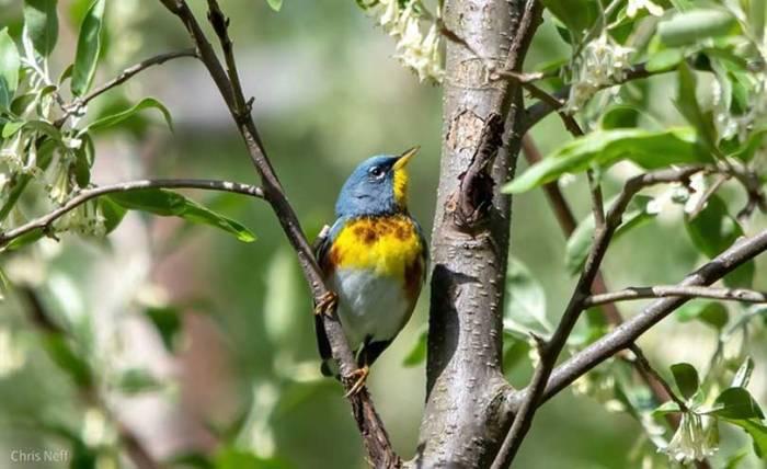 NJ Audubon seeks public's help in collecting data
