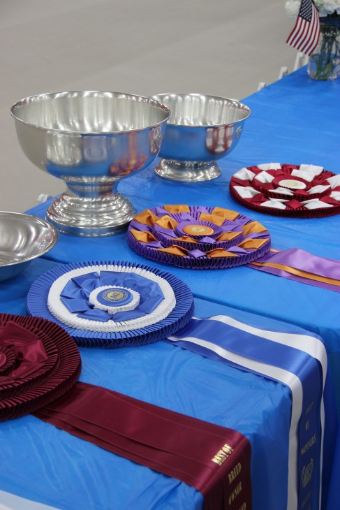 JCH Trophies table (3)